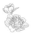 peony rose flowers isolated black white sketch vector image vector image