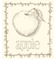 Apple and Leaves vector image vector image
