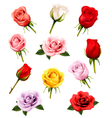 set different roses vector image vector image
