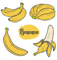 set of colorful hand drawn banana design vector image vector image