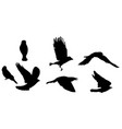 black silhouette of bird flying vector image