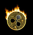crypto currency ripple golden symbol on fire vector image vector image