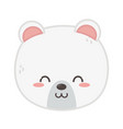 cute polar bear head on white background vector image vector image