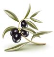 olive branch black vector image vector image