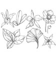 set hand drawn jungle leaves and exotic flowers vector image