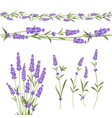 set lavender flowers elements vector image vector image