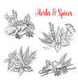 sketch spices and herbs for farm market vector image vector image