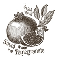 pomegranate logo design template fruit or vector image vector image