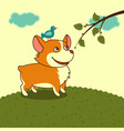 welsh corgi dog in the meadow in yellow sky vector image