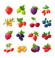 cartoon berries strawberries raspberries vector image vector image