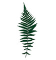 fern leaf silhouette background vector image vector image