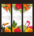 set tropical flower leaves animal card vector image