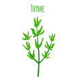 thyme organic spice cartoon flat style vector image vector image