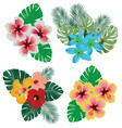 tropical flowers vector image vector image