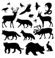 wild animals pictures vector image vector image