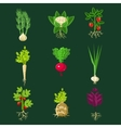 Fresh Vegetable Plants With Roots Collection vector image vector image