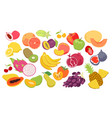fruits set fresh organic summer tropical food vector image
