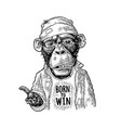 monkeys begging lettering born to win vintage vector image