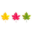 set colorful maple leaves red green yellow vector image