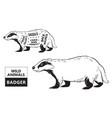 cut badger set poster butcher diagram - desert vector image vector image