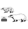 cut of badger set poster butcher diagram - desert vector image vector image