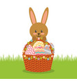 cute rabbit with basket full easter eggs field vector image