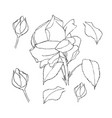rose set liner on white vector image