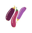 different eggplant varieties fresh vegetable vector image vector image