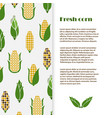 fresh corn banner template design harvest vector image vector image