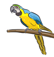 Macaw vector image vector image