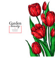 tulip flower and leaves drawing border vector image