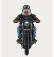 colorful angry eagle head biker vector image vector image