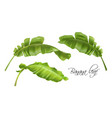Banana tropic leaves realistic images set