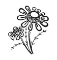 branch of chamomile icon simple style vector image