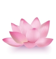 Photo-Realistic Lotus Flower vector image vector image