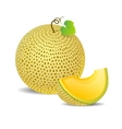 Ripe yellow melon and a piece just vector image