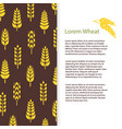 wheat ears bread banner template grains flyer vector image vector image
