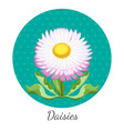 daisy flower with green leaves closeup in circle vector image