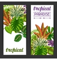 Banners with tropical plants and leaves Image for vector image vector image