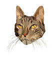 cat in low poly style vector image vector image