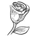 Doodle rose romance vector image