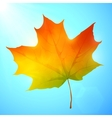 Golden autumn bright leaf in a blue sky vector image vector image
