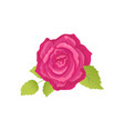 rose flower with green leaves vector image vector image
