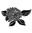 decorative hydrangea vector image