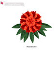 Tulip Flowers The National Flower of Nepal vector image vector image
