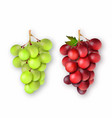 3d realistic bunches of grapes vector image vector image