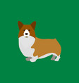 cartoon welsh corgi breed of dog vector image