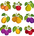Collection of 3d simple fruits icons with green vector image vector image