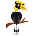 cute horn bill cartoon vector image vector image