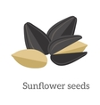 Sunflower Seeds vector image vector image